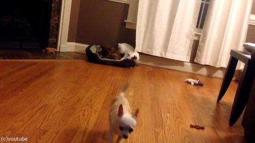 犬2匹がベッドの追い出しに成功09