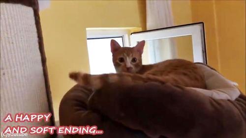 よりふかふかのベッドを探求する猫05