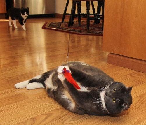 ダイエット猫04