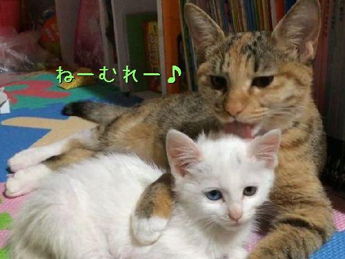 ママ猫が子猫を寝かしつける一部始終00