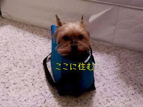 ランチボックス好きの犬00