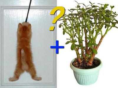 猫のなる木TOP