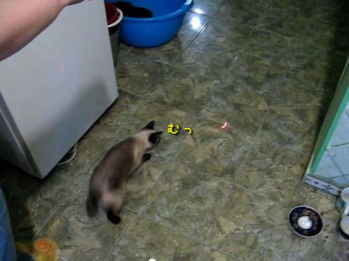 スパイダー猫
