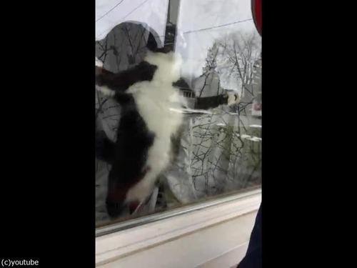 激しいあいさつ猫02