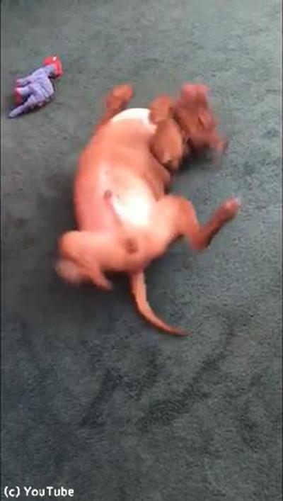 犬「背中がかゆい…」→こんな行動に出る03