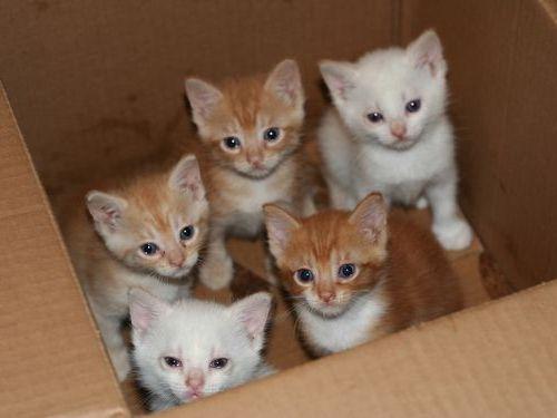 00Box・箱や入れ物に収まる動物たち