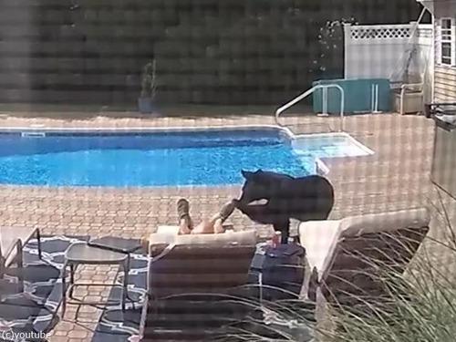 プールサイドで寝てたらクマが足を突っついてきた03