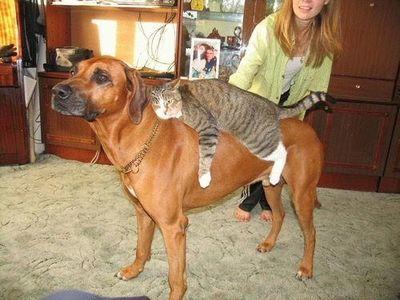 猫をおんぶする犬