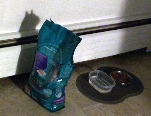 猫に見える何か09