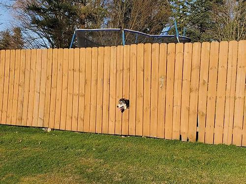 フェンスから顔を出す犬にポスター00