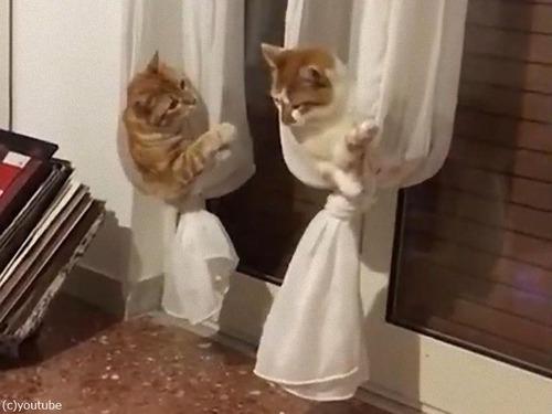 カーテンを猫のハンモックにするアイデア00