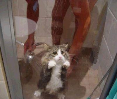 悲しい顔した動物たち01