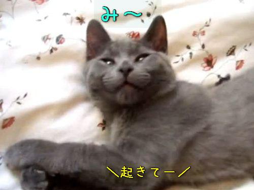 返事はいいけど起きない猫00