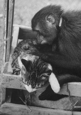 猿と猫の仲05