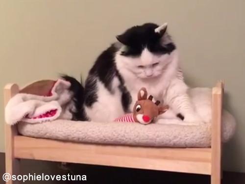 猫のソフィちゃんは毎晩こうやって寝る03
