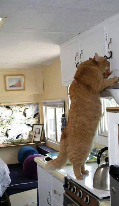 育ちすぎた猫たち13