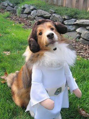 スターウォーズな犬14