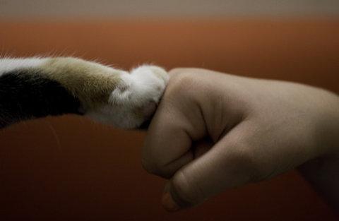 猫のハイタッチ09