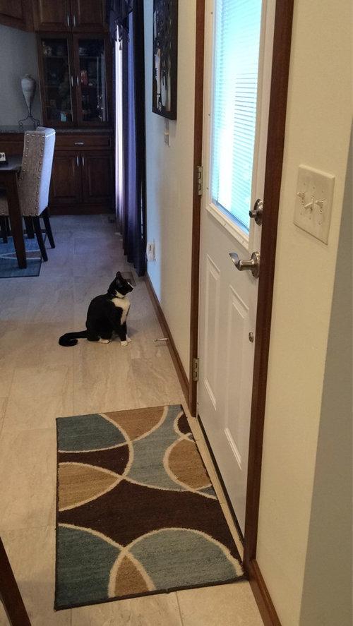 盲目の猫が外に出たいとき01