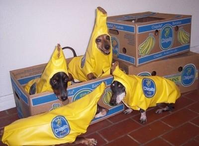 酷い犬のコスプレ01