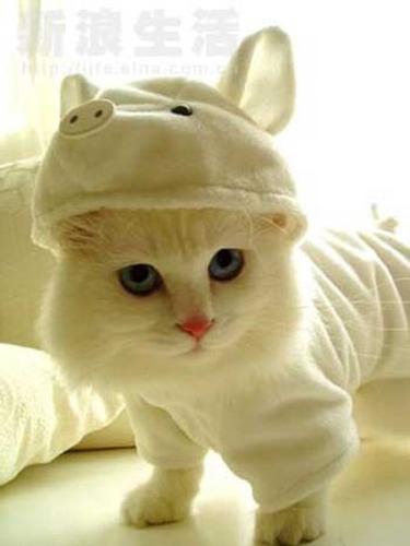 猫コスプレ13