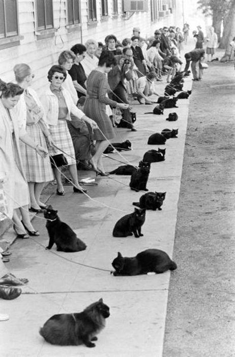 黒猫のオーディション01