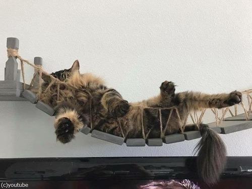猫と吊り橋07