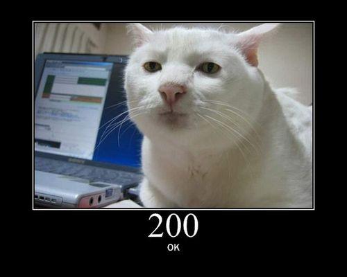 猫でHTTPステータスコード02