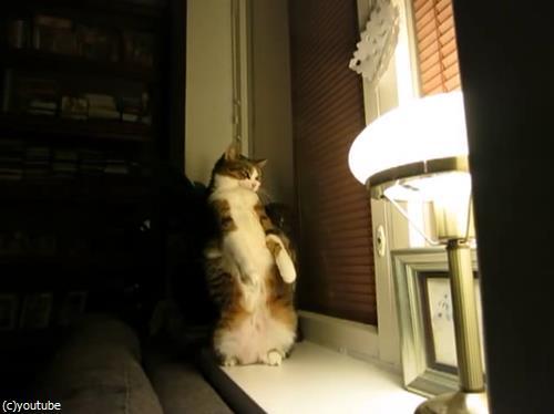 猫のストレッチをいろんな角度から眺めてみた02