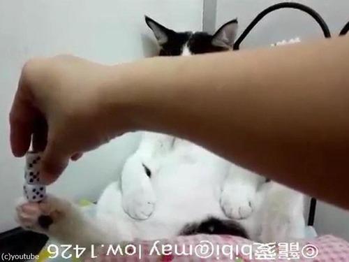 足にサイコロを積み上げる猫02