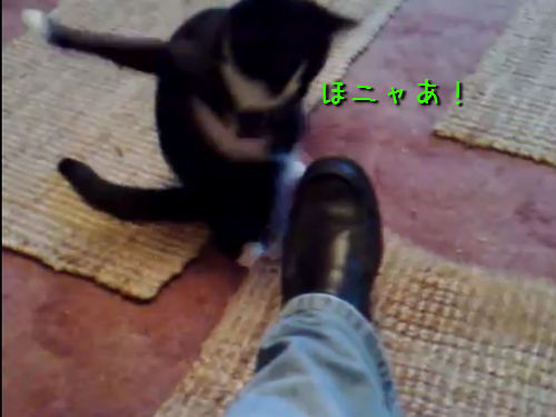 スーパー猫パンチ