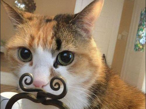 楽しい猫たち00