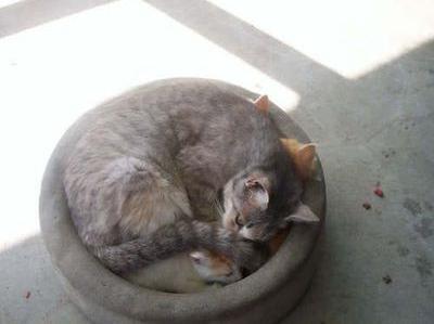 猫が、猫がはみ出てる…01