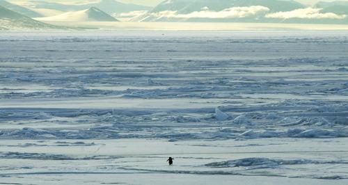 ペンギンひとり01