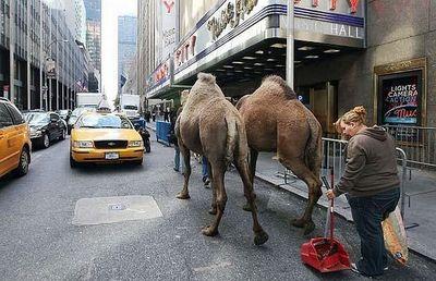 街中に現れた動物たち12