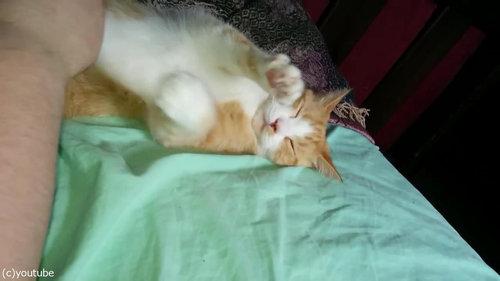 眠る猫のお腹をナデナデしたら足がピーン02