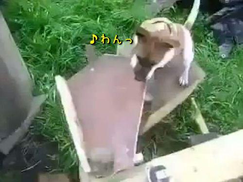 自動犬プレイ・マシーン00