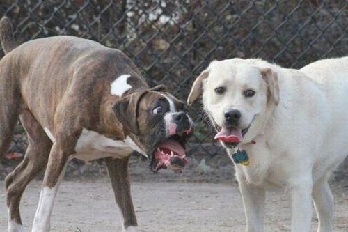 犬の表情18
