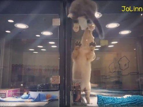 隣の犬に会いに行く猫06