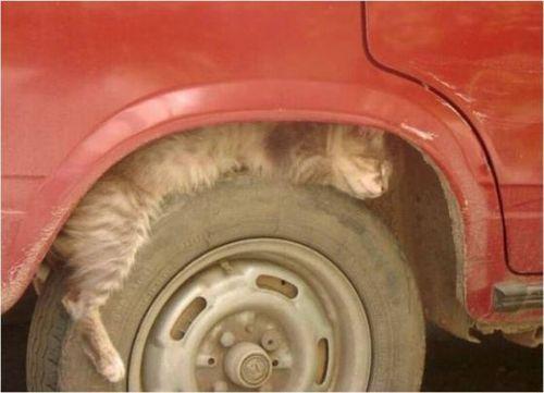 眠る猫16