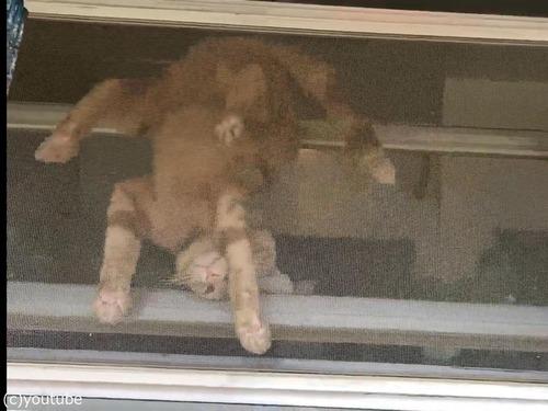 家を出たがっている猫02