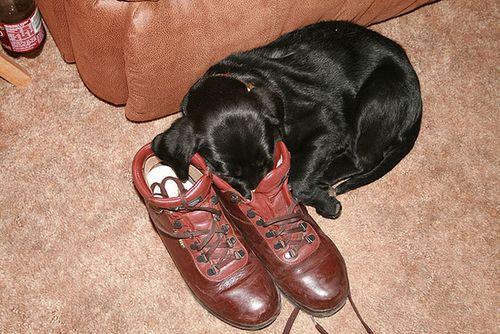 靴の中の犬10