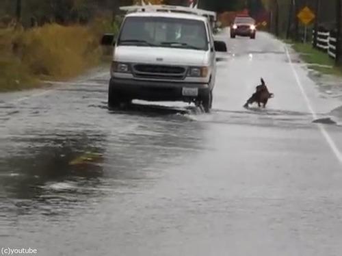 道路で犬が魚釣り02