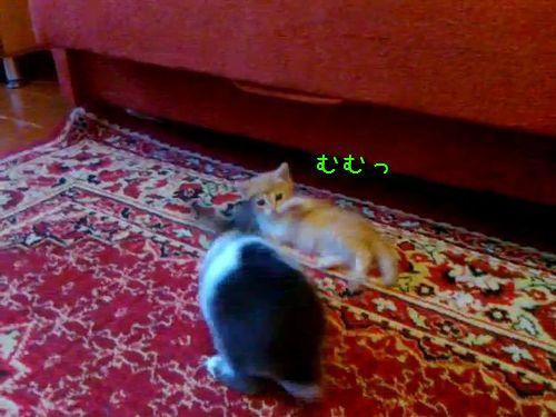 うさぎvs猫