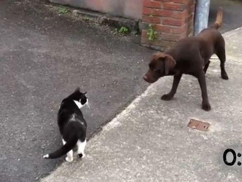 猫にコテンパンに負ける犬たち01