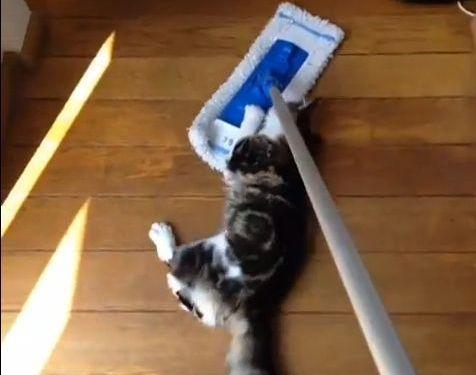 クイックルワイパーと猫01