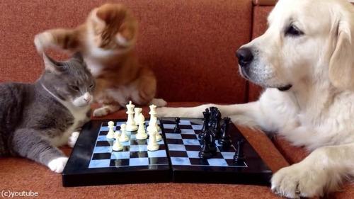 猫がチェスの審判をすると…02