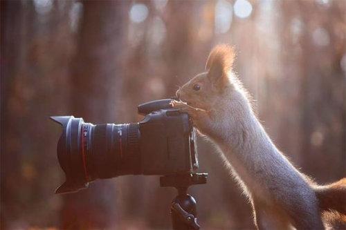 カメラマンな動物07