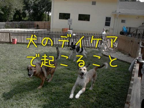 犬のデイケア00