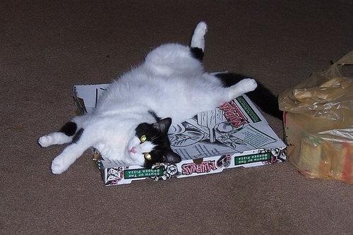ピザ猫17